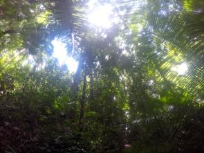 Jungle Malenge