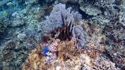 Reef 5